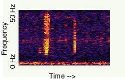 """Como ficou registrado no espectrograma o som """"BLOOP"""""""
