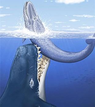 """Pintura que dá a ideia de uma  pretensa """"Super Baleia"""" atacando uma Baleia Azul"""