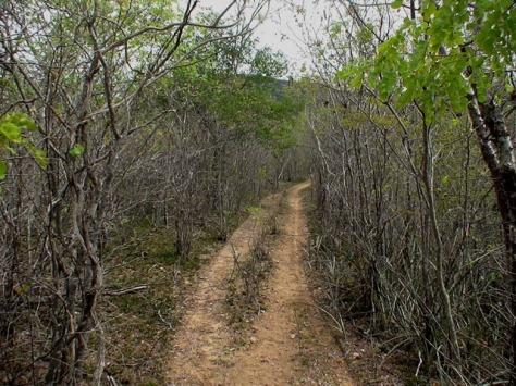 Pelas mesmas trilhas dos cangaceiros