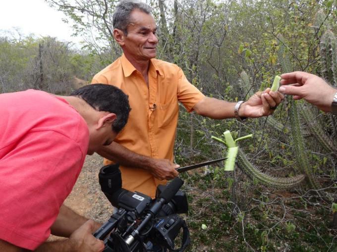 Seu Luiz mostrando os segredos da flora do sertão, úteis a sobrevivência em uma região seca