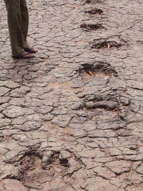Trilha fossilizada no Vale dos Dinossauros, no município de Sousa - Fonte - Fabio Colombini