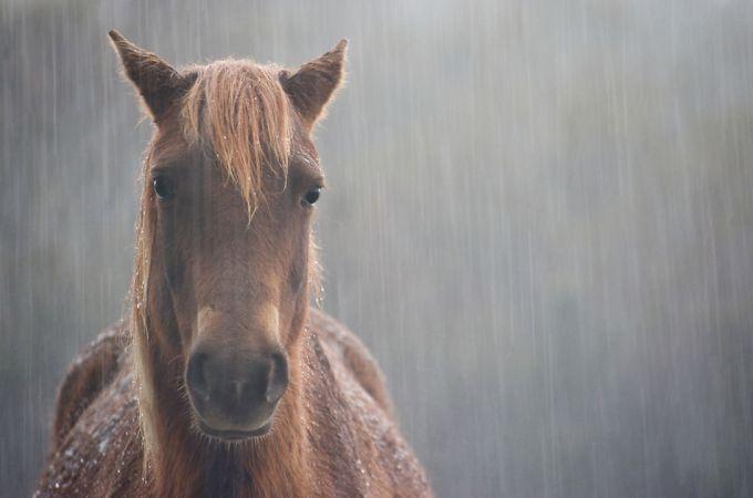 cavalo-na-chuva-143204