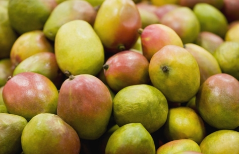 mango-stone-fruit