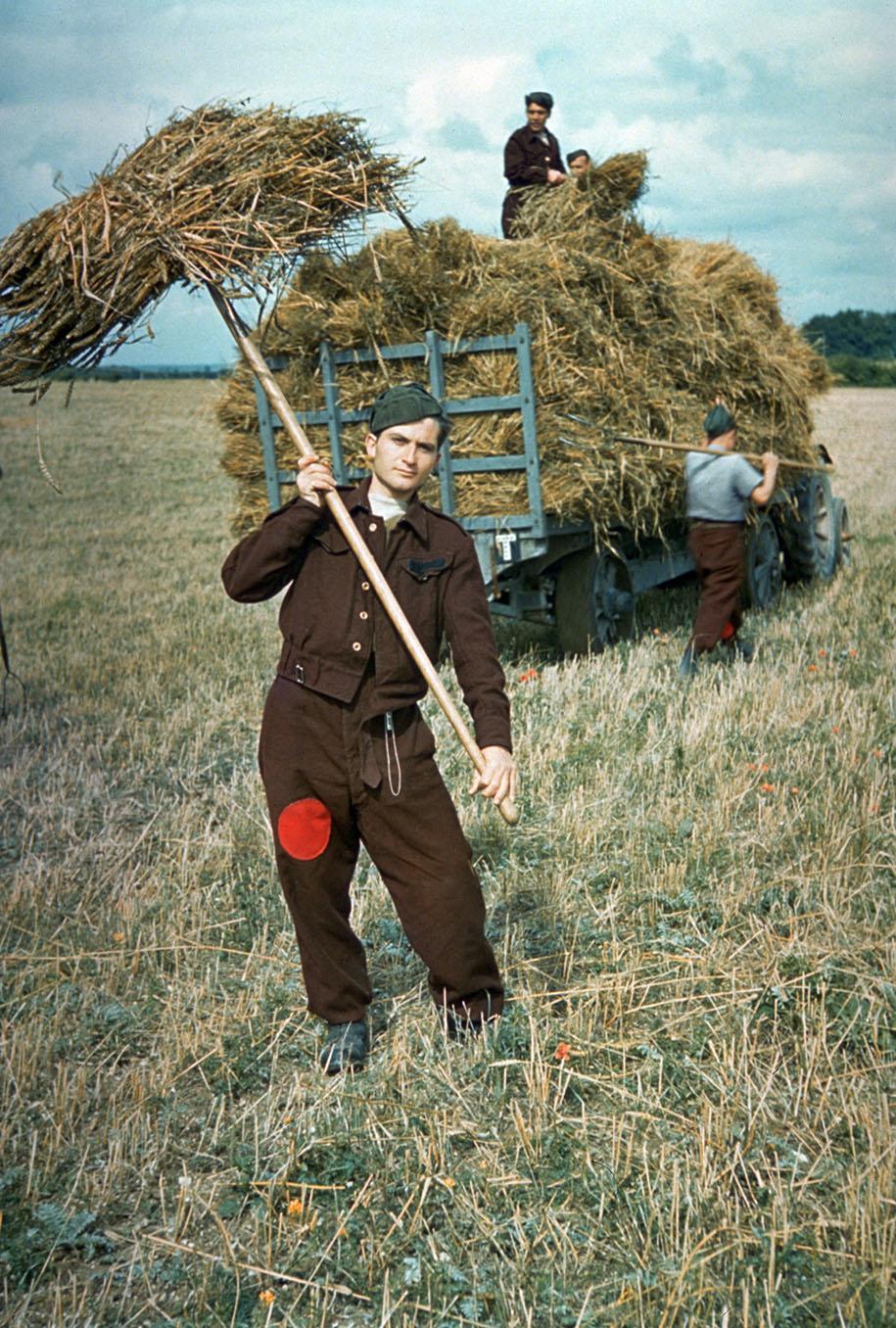 Prisioneiros alemães ajudando na colheita em solo britânico. Existiram 1.026 campos de prisioneiros na Grã-Bretanha durante a Segunda Guerra Mundial – Foto - Hulton Archive/Getty Images