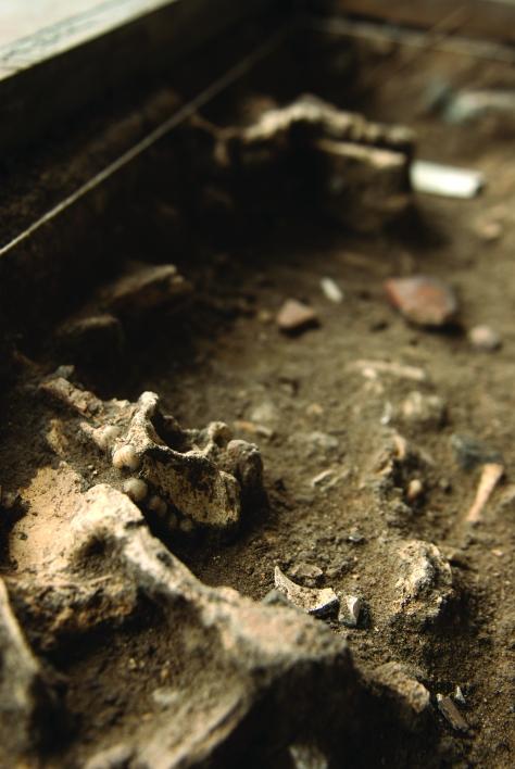 Ossada no Cemitério dos Pretos Novos: parte dos escravos já chegava ao Brasil com a bactéria da tuberculose - Foto - Léo Ramos
