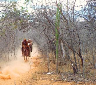 Corrida de vaqueiros no meio da caatinga da Fazenda Barreiros - CLIQUE NAS FOTOS PARA AMPLIAR